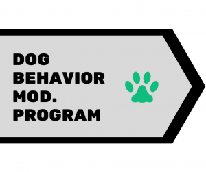 Dog Behavior Modification Program