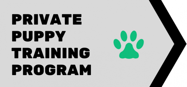 Private Puppy Training Program