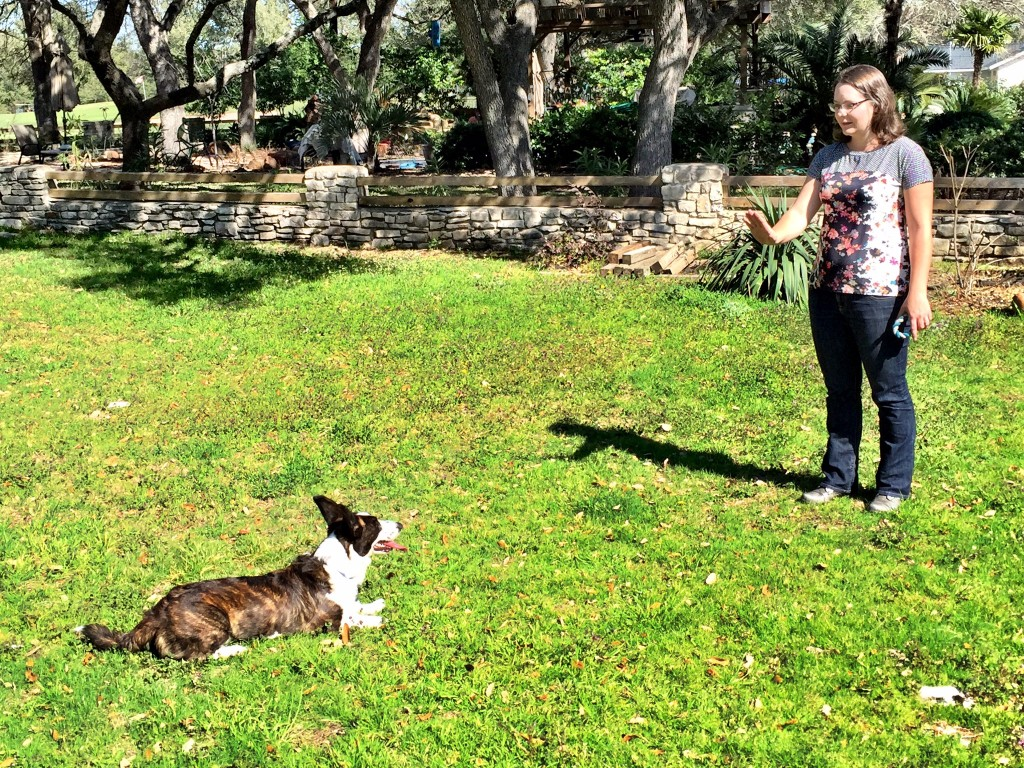 dog obedience amherst ny