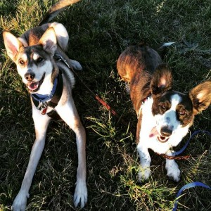 dog training philosophy